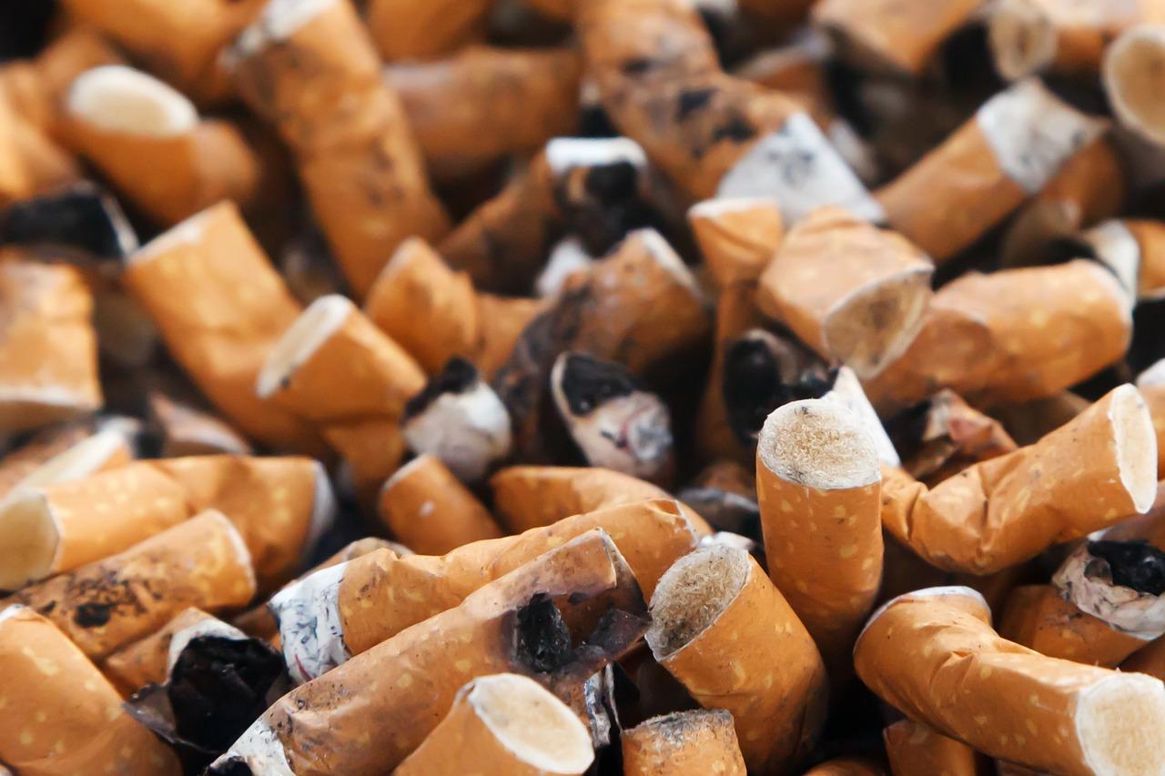 Tierversuche für die Tabakindustrie