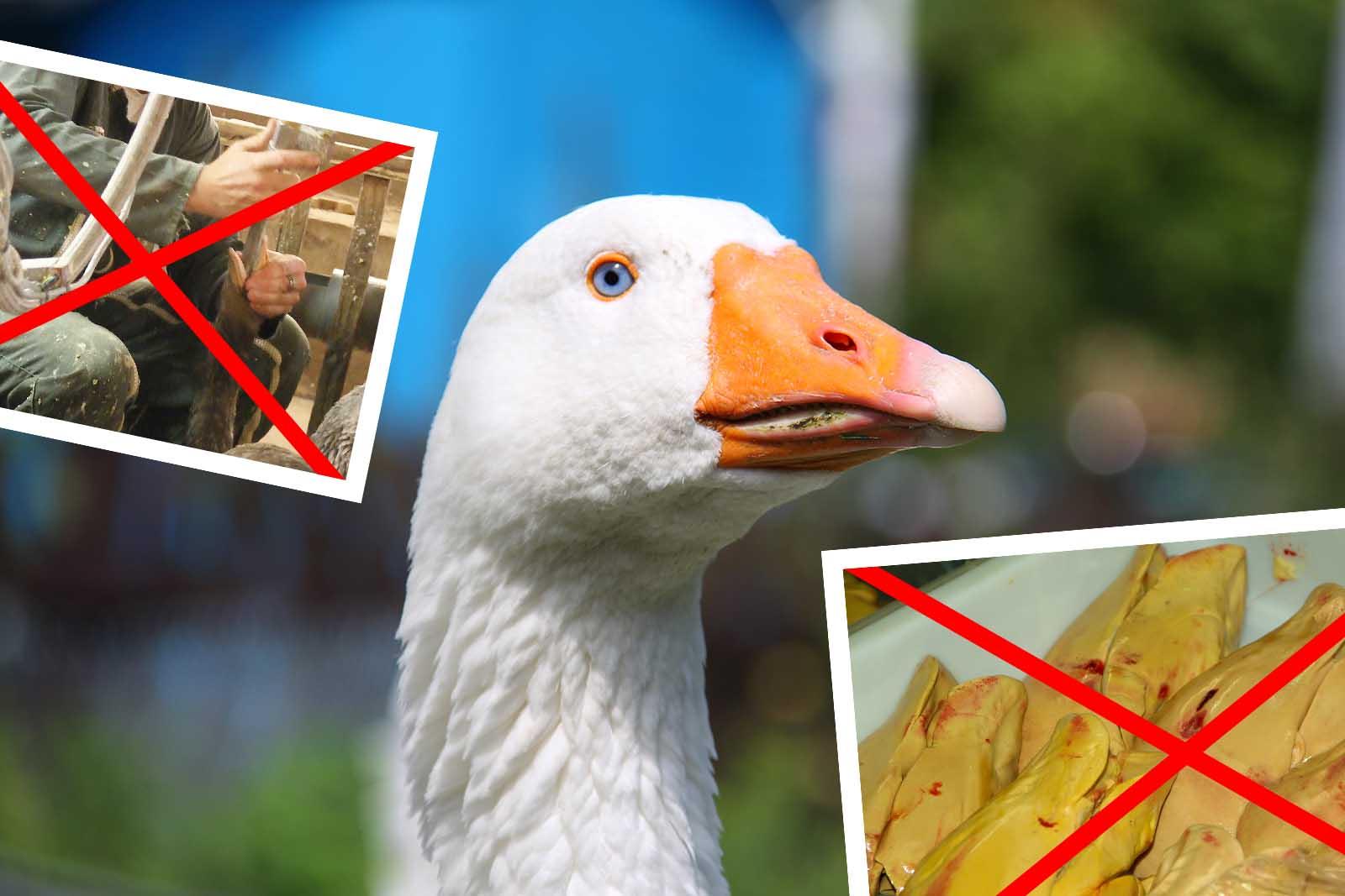 Gute Nachrichten aus Belgien: Flandern verbietet die Produktion von Stopfleber