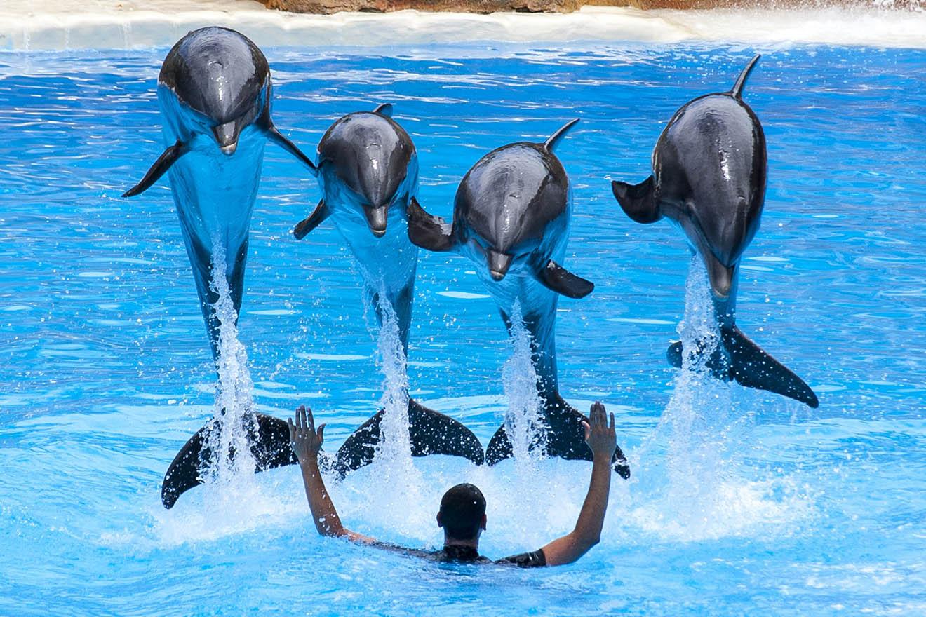 Delfinshows – Wie Delfine leiden, wenn Trainer auf ihren Gesichtern stehen
