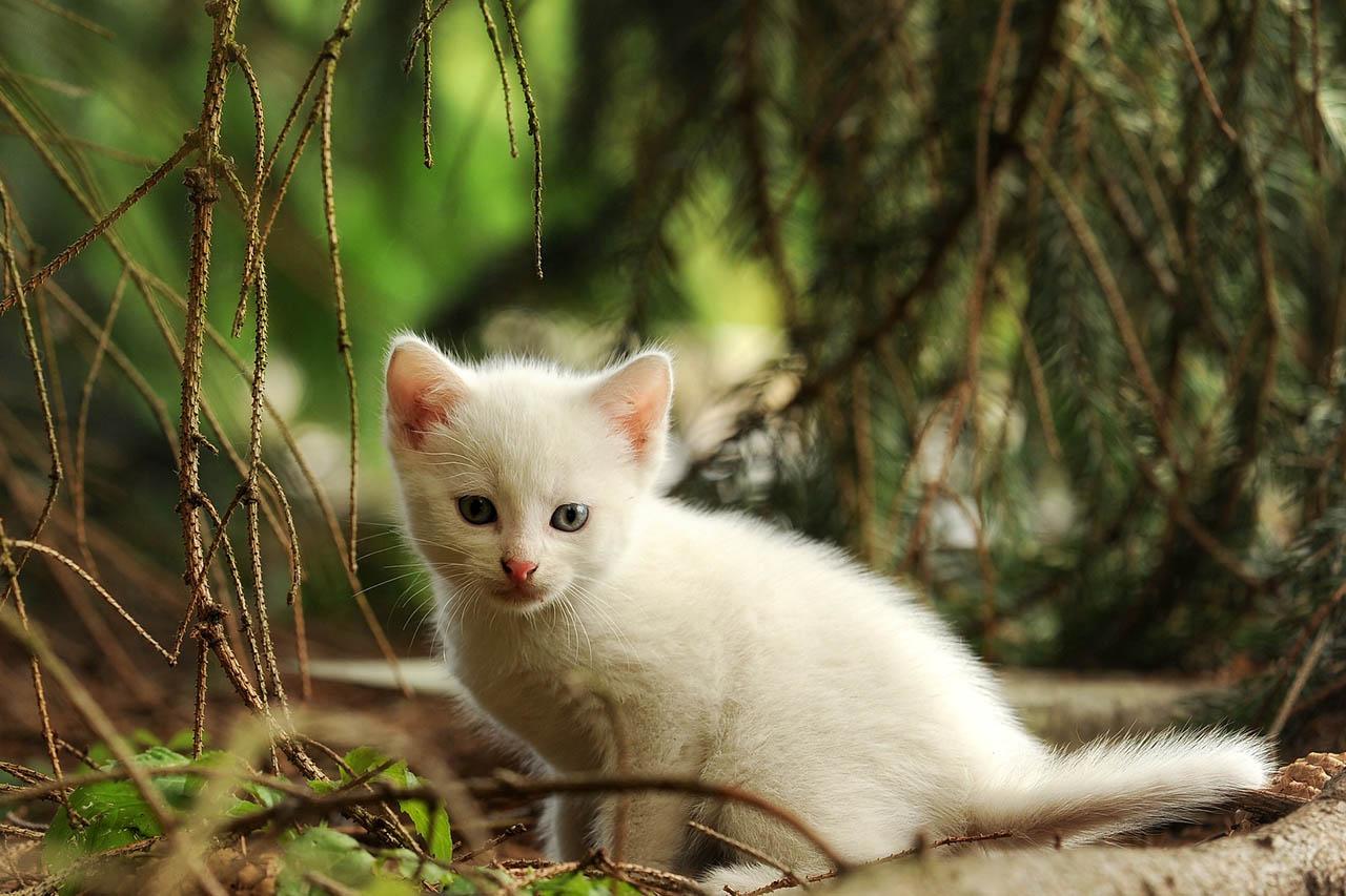Katze vermisst: Was tun, wenn die Katze entlaufen ist?