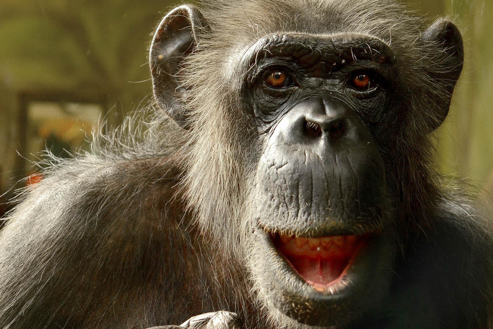 Diese 5 Mythen über Tiere halten sich hartnäckig – sind aber falsch