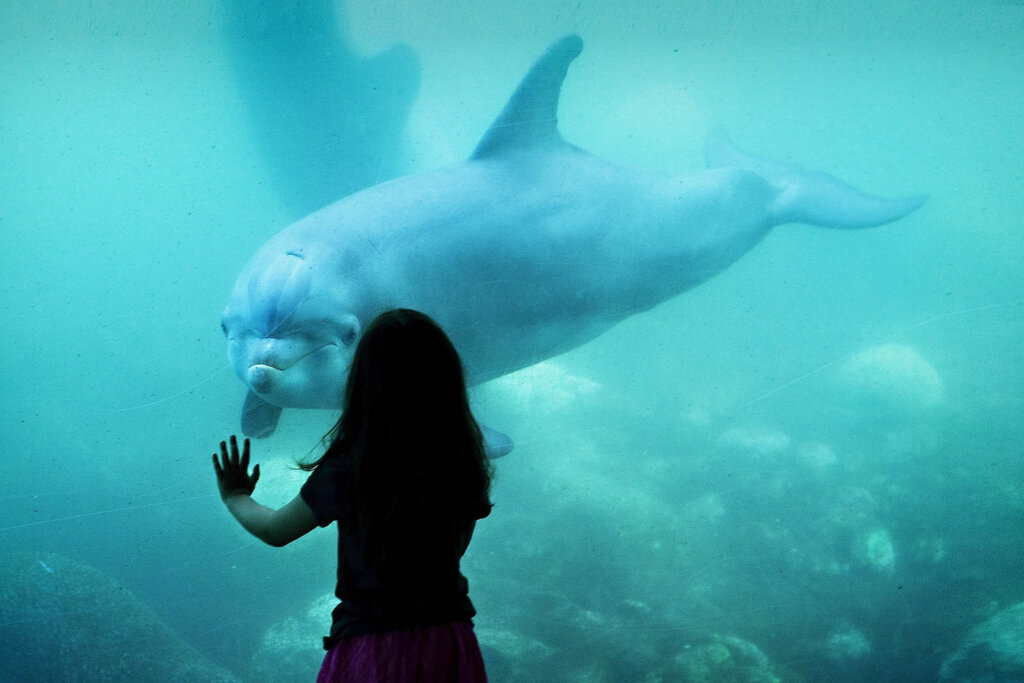 Delfin im Meereszoo