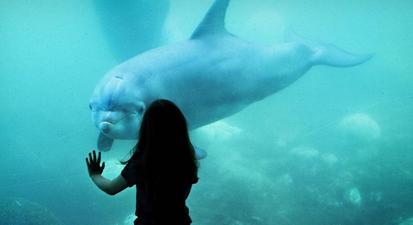 Kind vor Aquarium mit Delfin