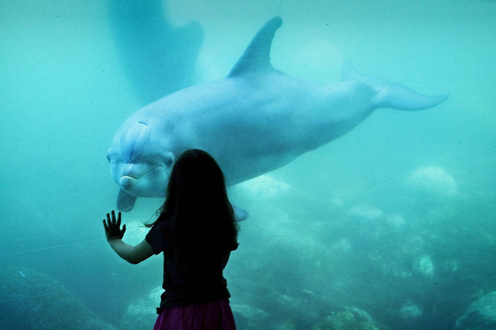 Delfinarien: Alle Informationen über die Delfinarien in Deutschland