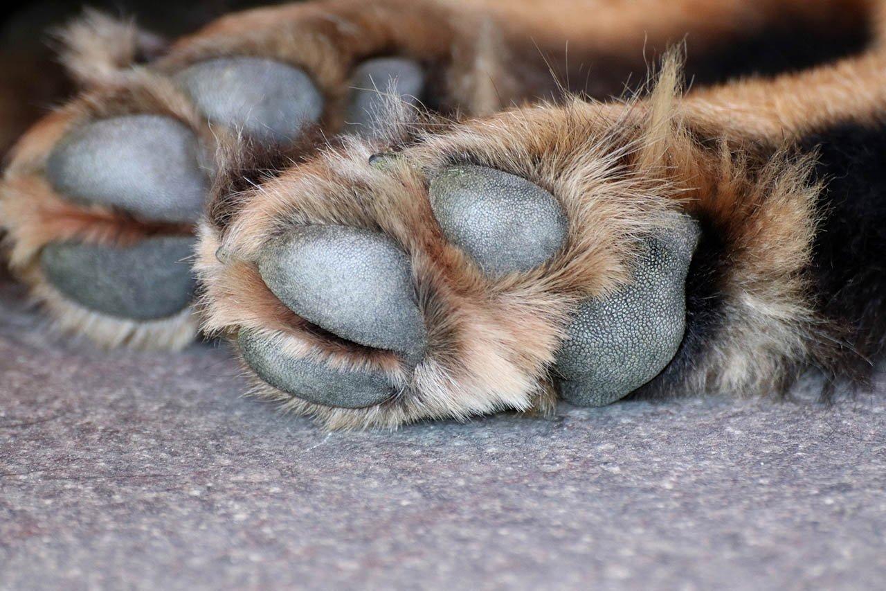 Training Nach Den Methoden Von Cesar Millan Hund Stirbt