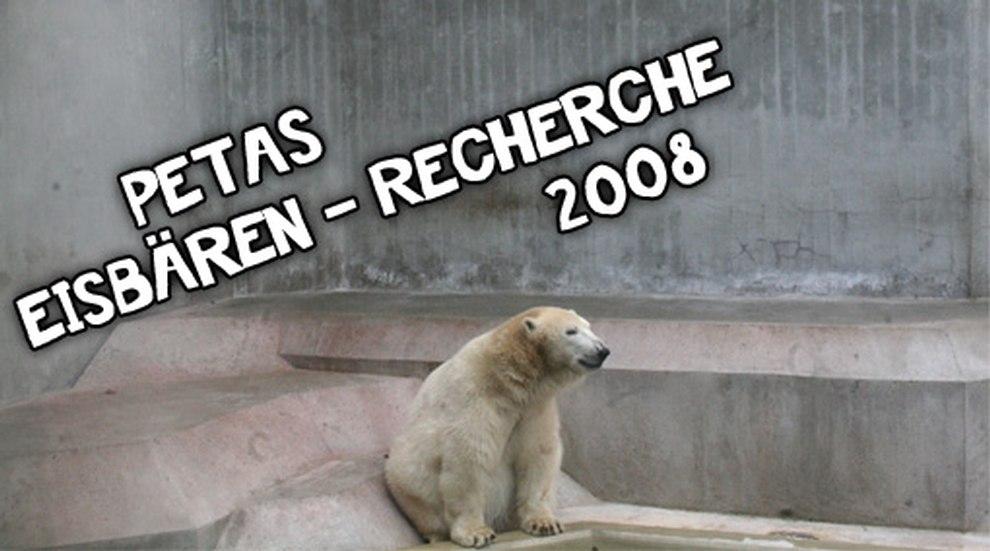 PETAs Eisbären-Recherche 2008
