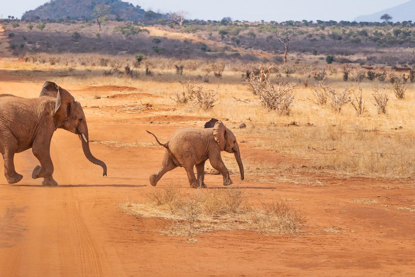 USA: Zoos wollten 28 wild lebende Elefantenkinder einfangen