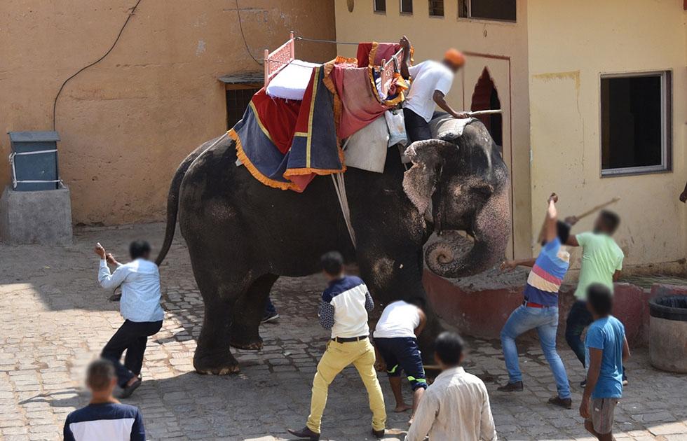 Vielen Dank: alltours bietet Elefantenreiten nicht mehr an