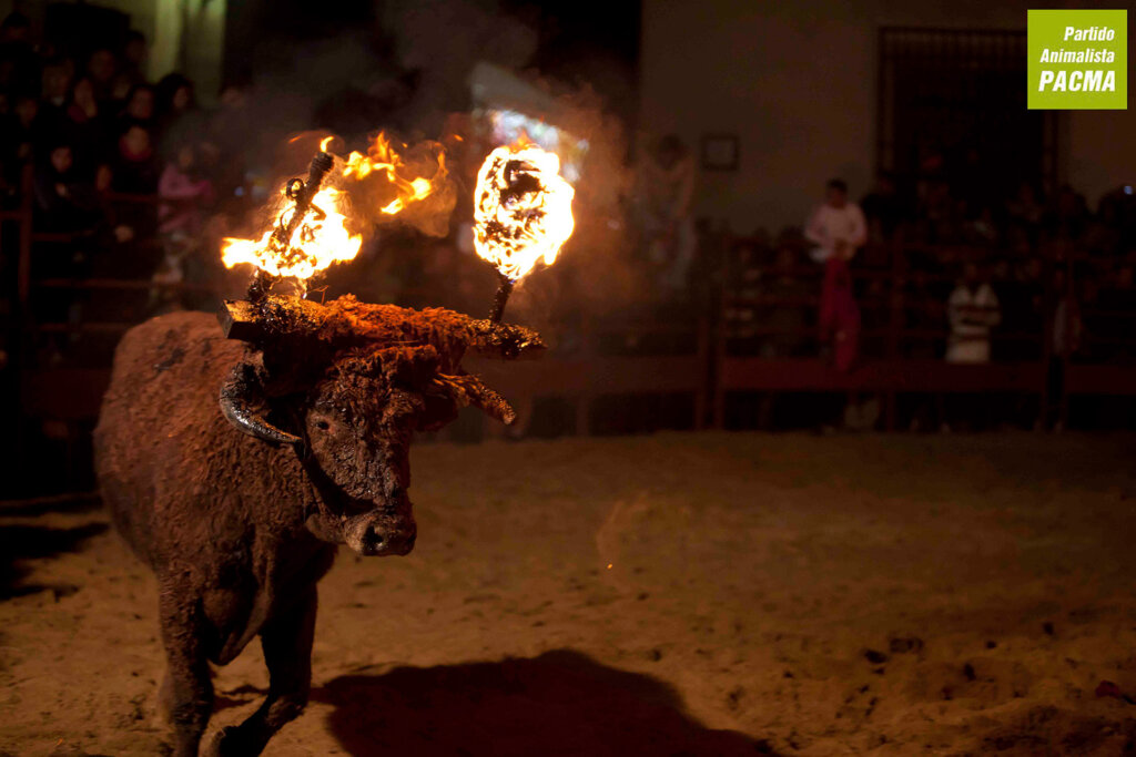 Feuerstier Toro Jubilo