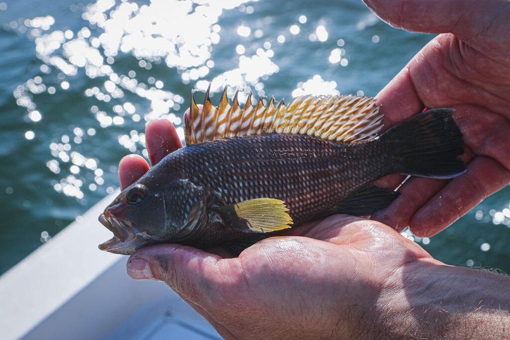 Mann mit Fisch in der Hand