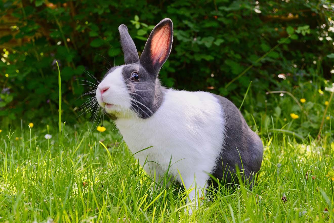 Das Kaninchen – 11 faszinierende Fakten über Kaninchen