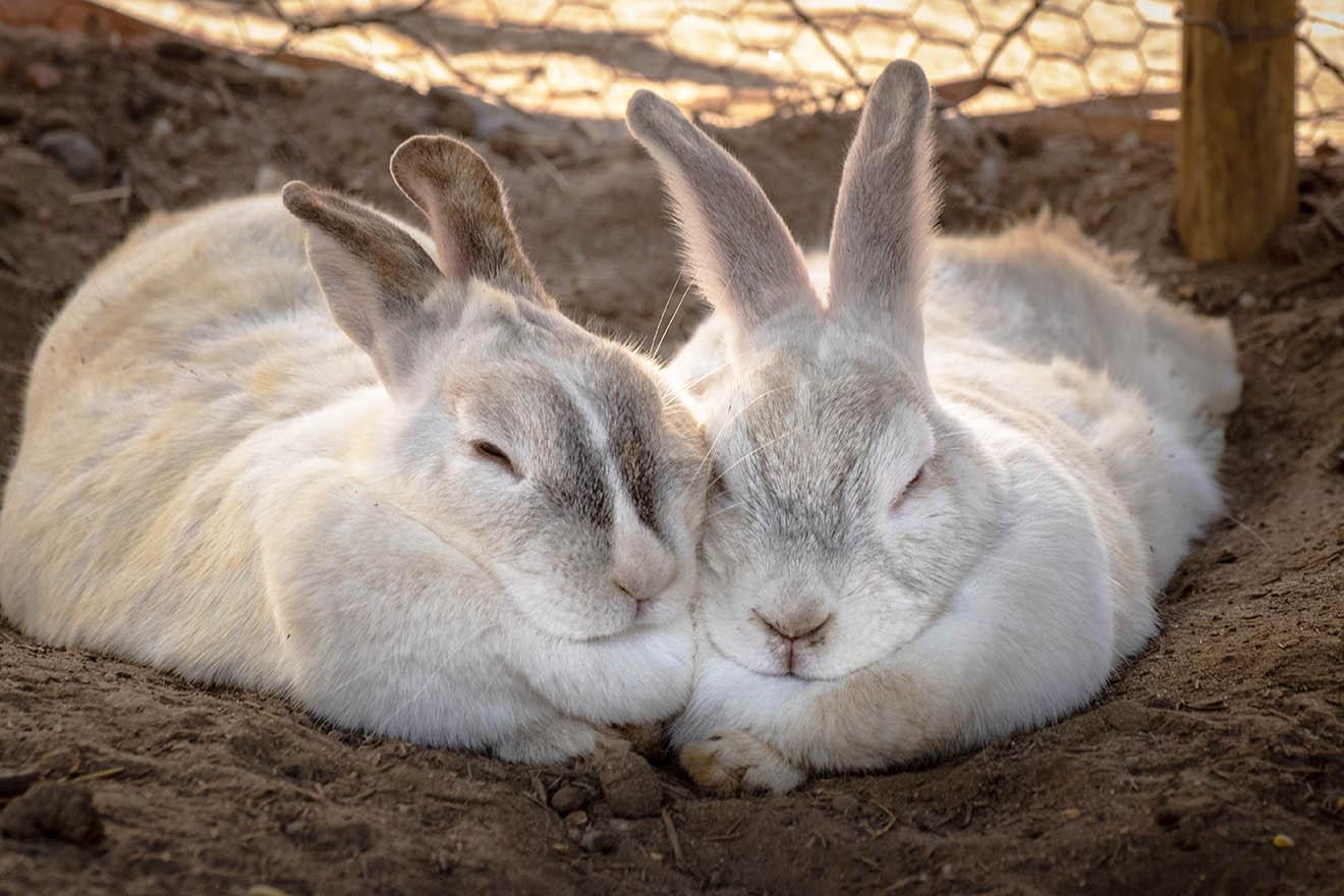 Kaninchen beim kuscheln