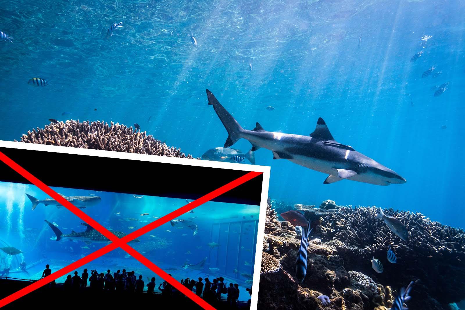 SIEG für Haie: Loomus, PETA und weitere Organisationen verhindern Bau eines neuen Hai-Aquariums in Estland