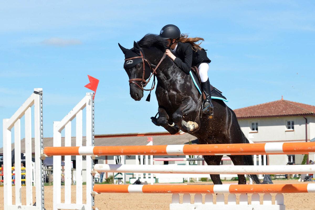 Petition an das IOC: Kein Pferdesport bei den Olympischen Spielen