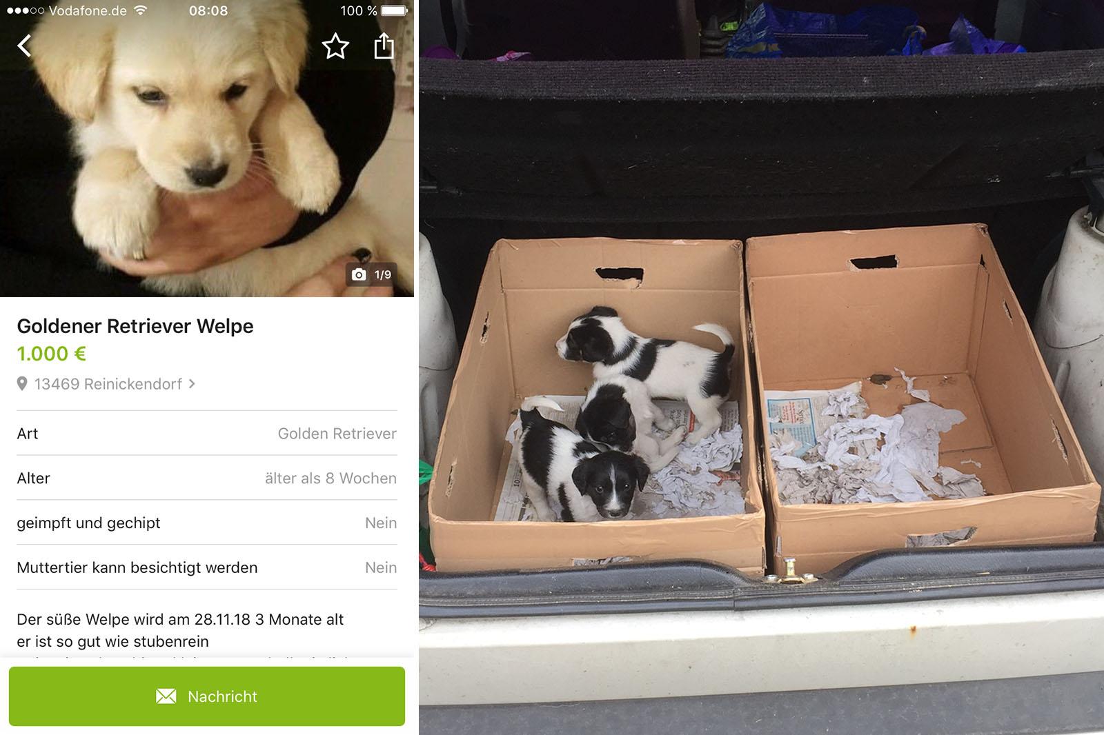 Illegalen Welpenhandel bei eBay Kleinanzeigen aufgedeckt!