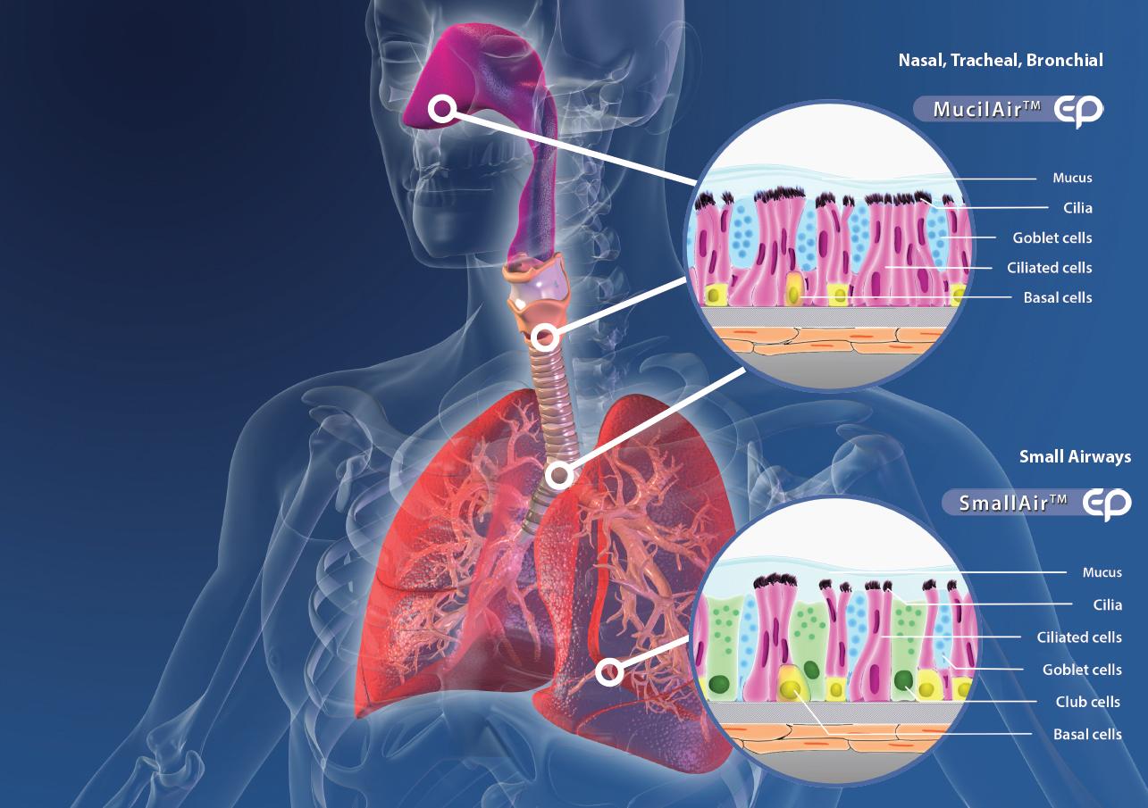 Forscher gewinnen Wettbewerbspreis: 3-D-Modelle aus menschlichen Zellen statt Tierversuche