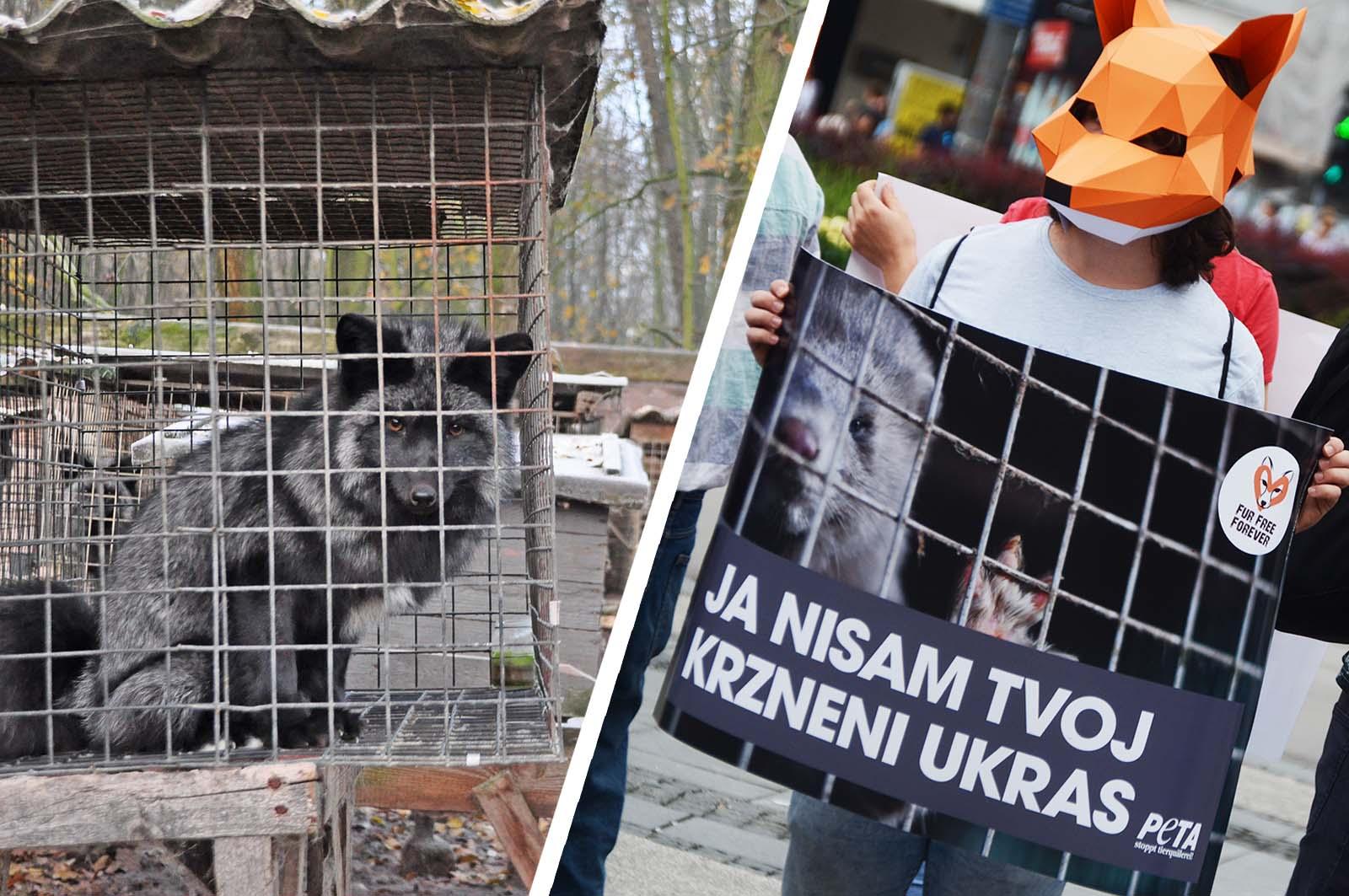 Förderprogramm Year of Change – für mehr Tierrechte in Osteuropa