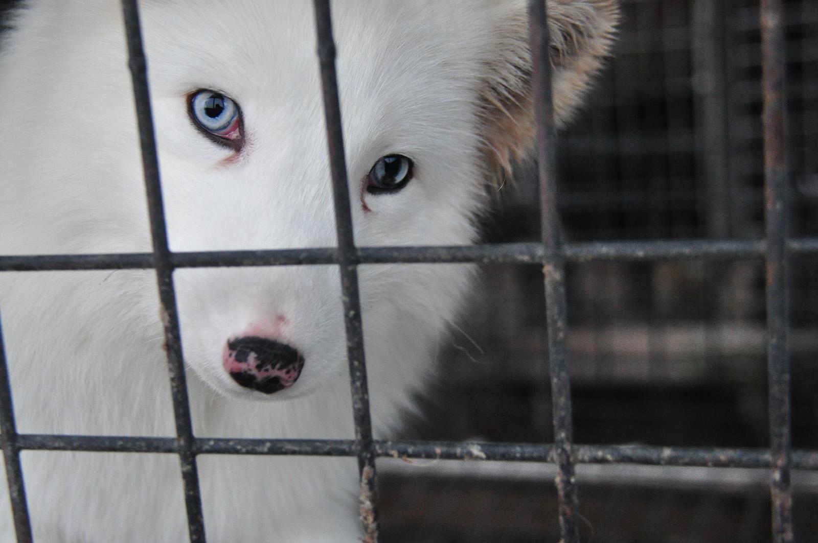 Modeopfer: Tiere in der Pelzindustrie