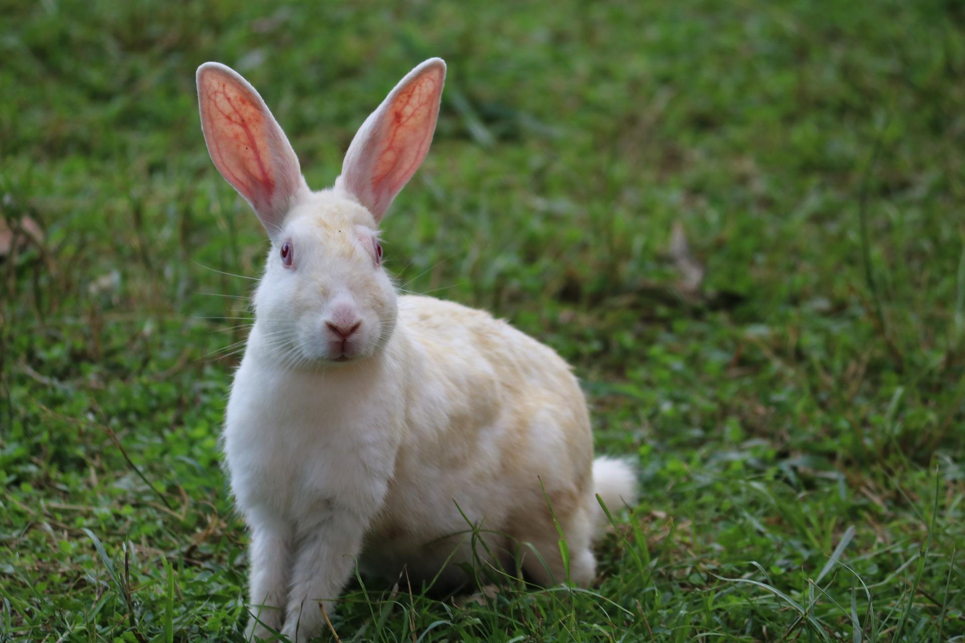Avon macht großartige Fortschritte hin zu tierversuchsfreier Kosmetik!