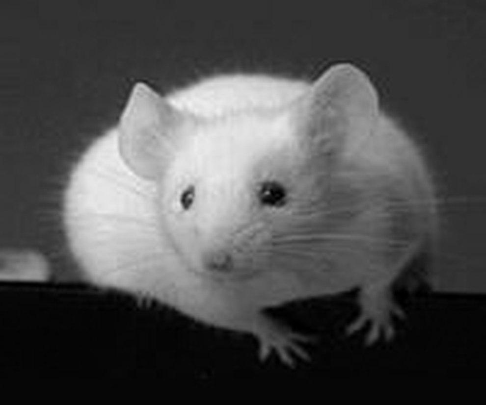das unbekannte leben von ratten und m usen. Black Bedroom Furniture Sets. Home Design Ideas