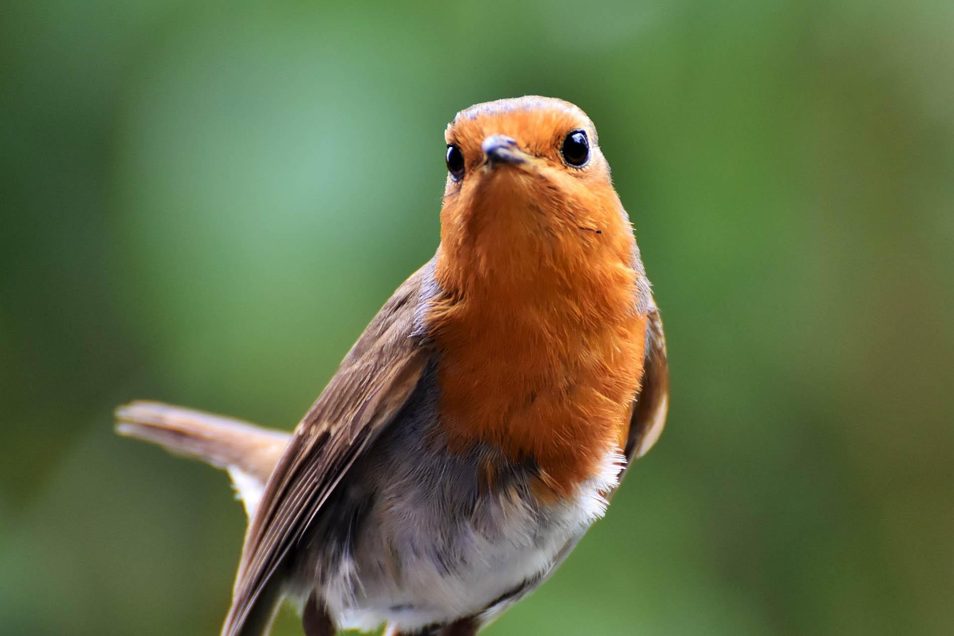 Universität Oldenburg: Tierversuche an Vögeln müssen beendet werden