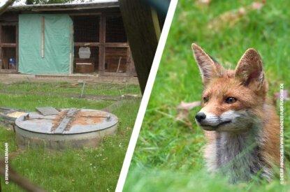 Collage Schliefanlage und Fuchs