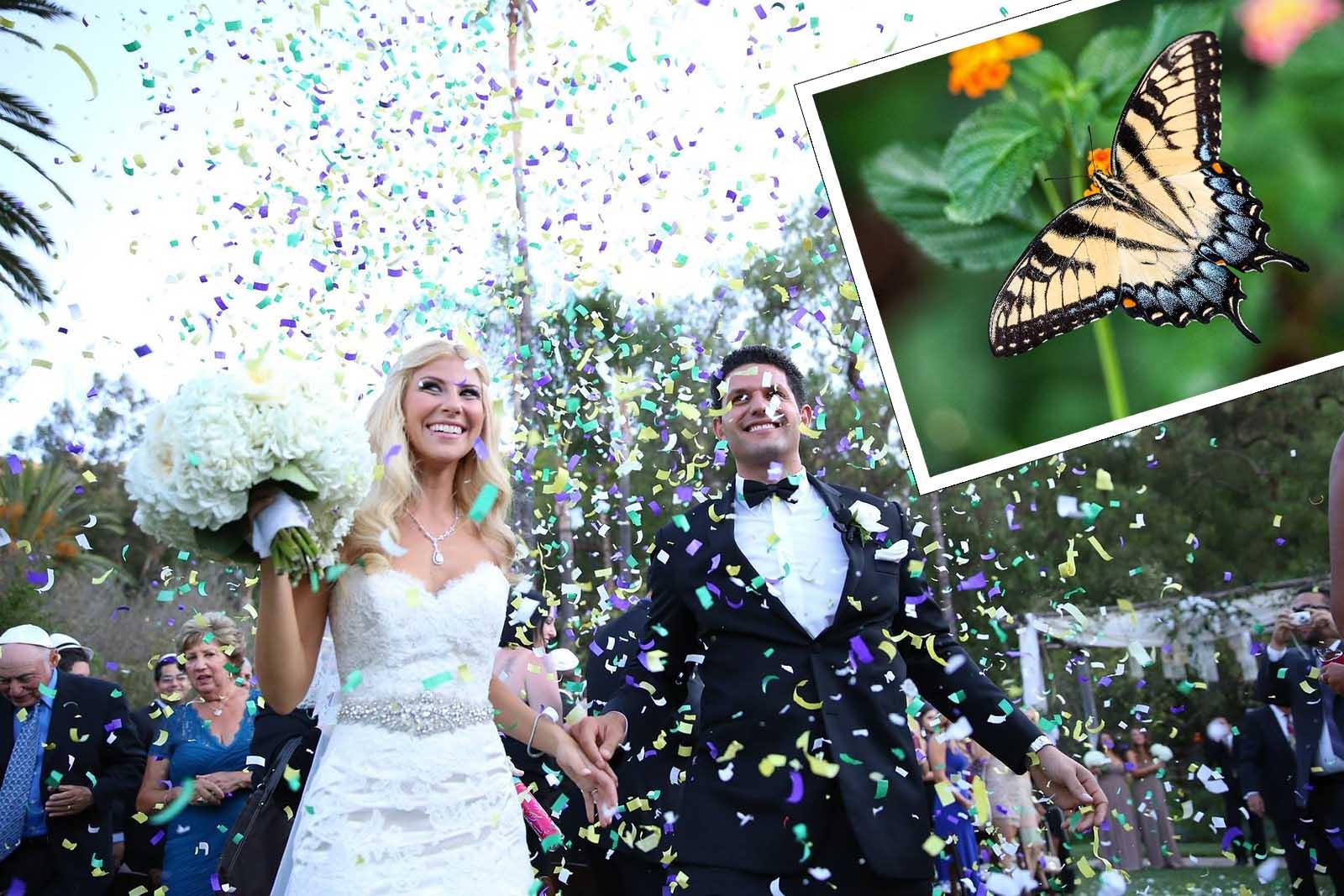 Schmetterlinge zur Hochzeit: Viele werden zerquetscht!