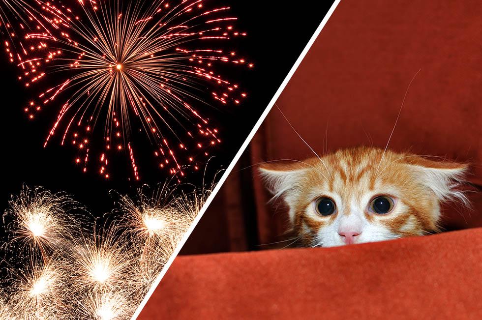 Feuerwerk Silvesterhorror Für Die Tiere