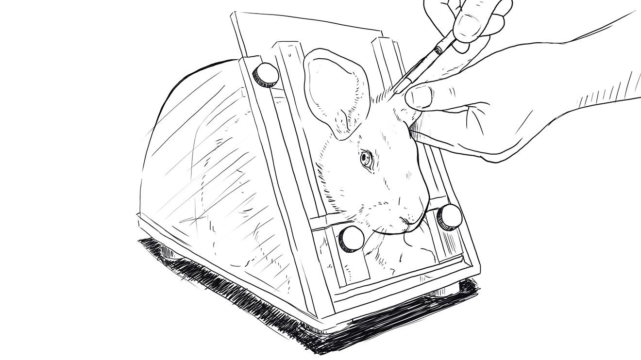 Tierversuche an Kaninchen Skizze