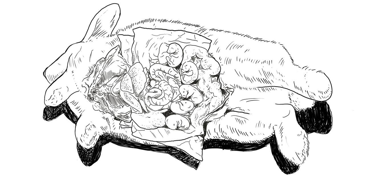 Tierversuche an schwangeren Kaninchen Skizze