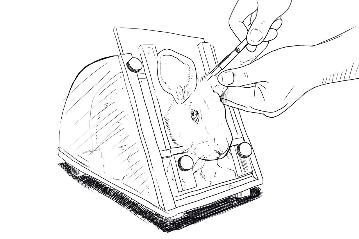 4 Tierversuche an Kaninchen, die Sie schockieren werden