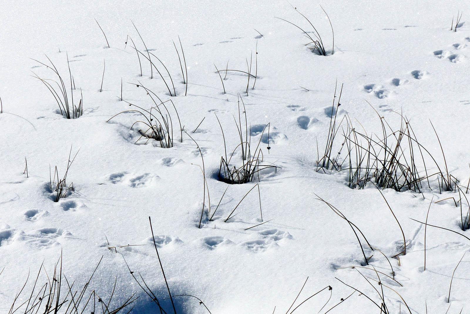 Tierspuren im Schnee: So können Sie Tierspuren erkennen