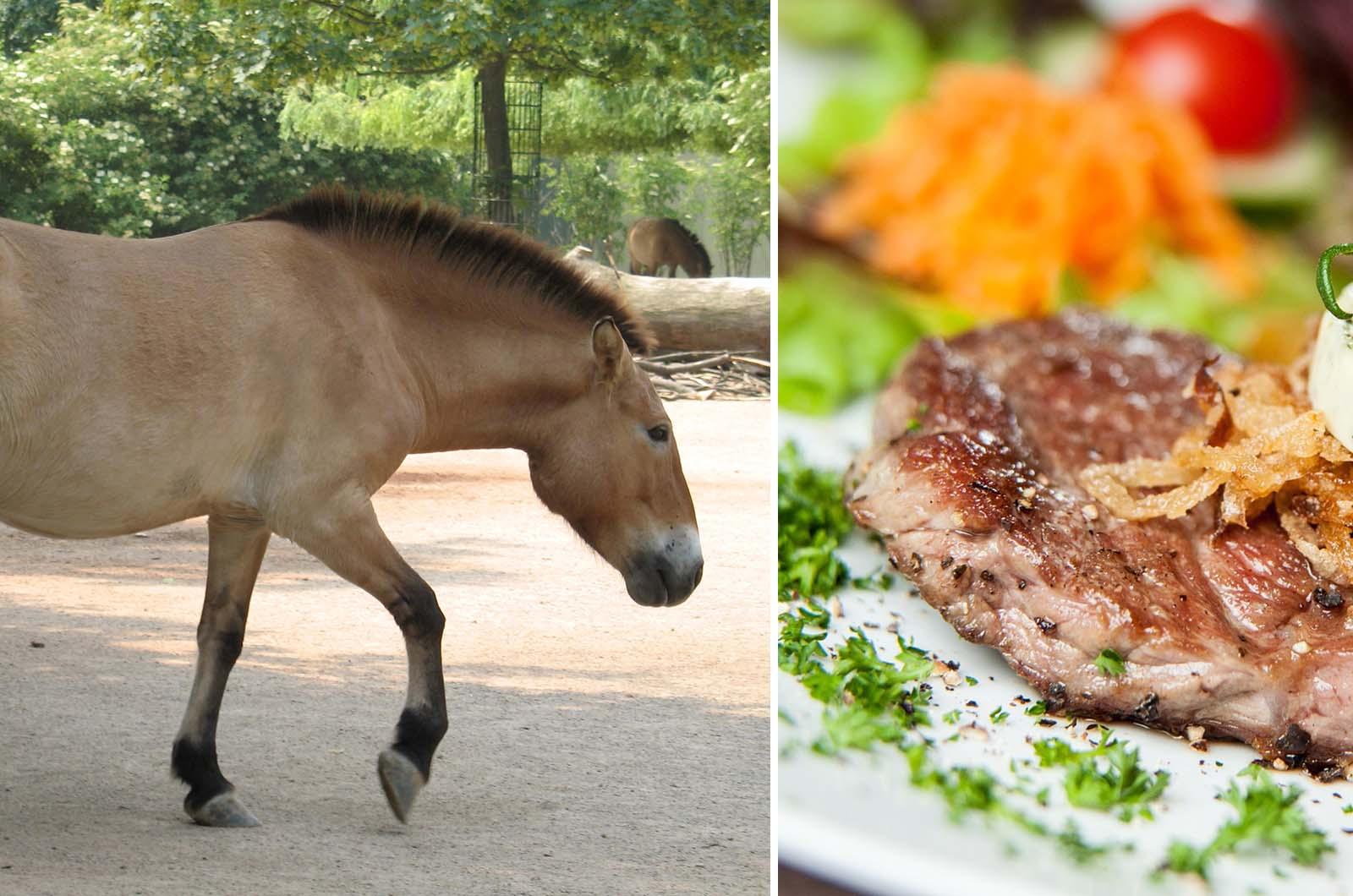TATORT im Faktencheck: Tiere aus dem Zoo landen wirklich auf dem Teller