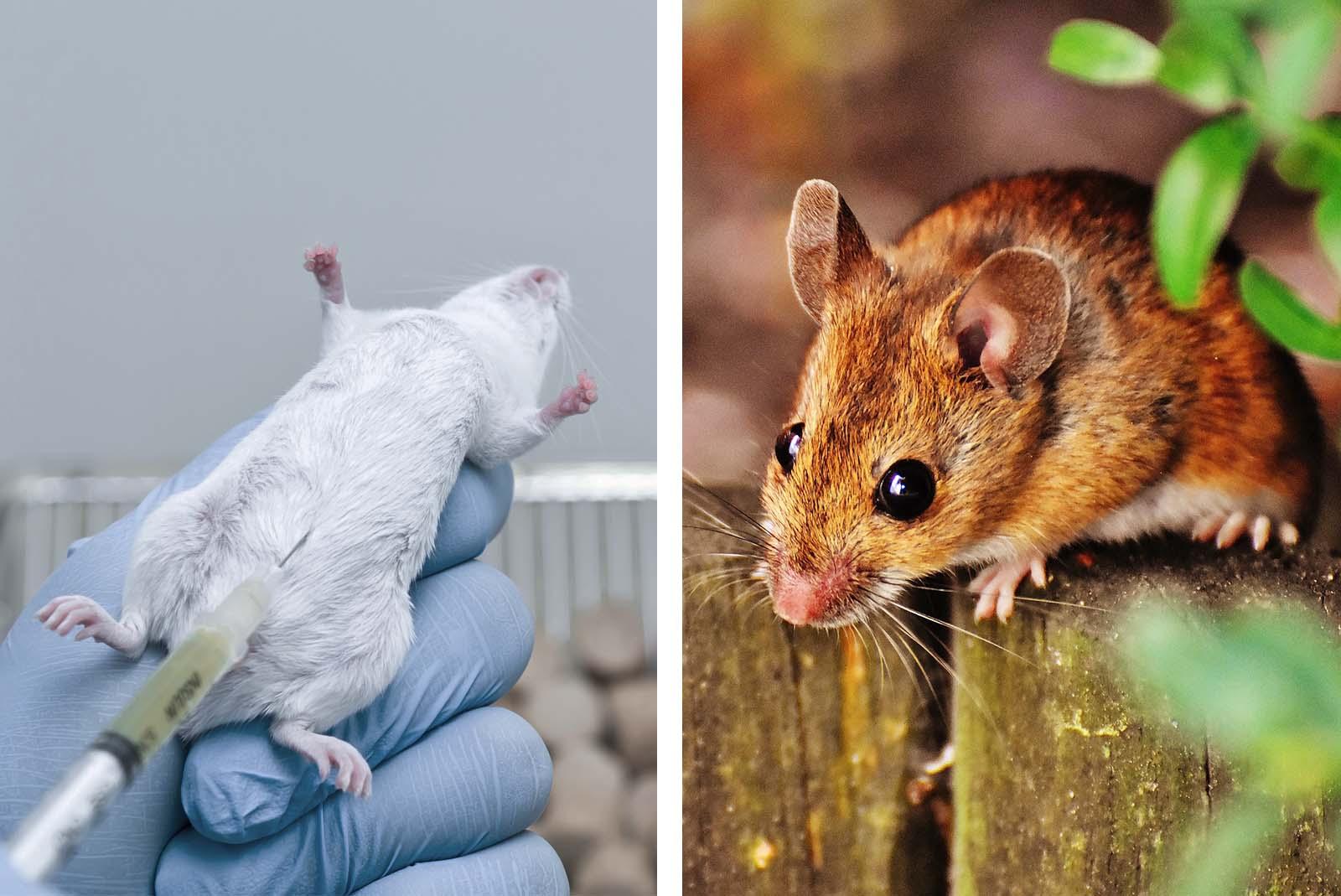 Tierversuche und Ethik: Tiermissbrauch ist moralisch nie vertretbar