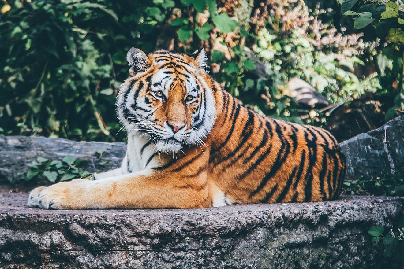 """Rund 70 Löwen und Tiger aus """"Tiger King Park"""" beschlagnahmt"""