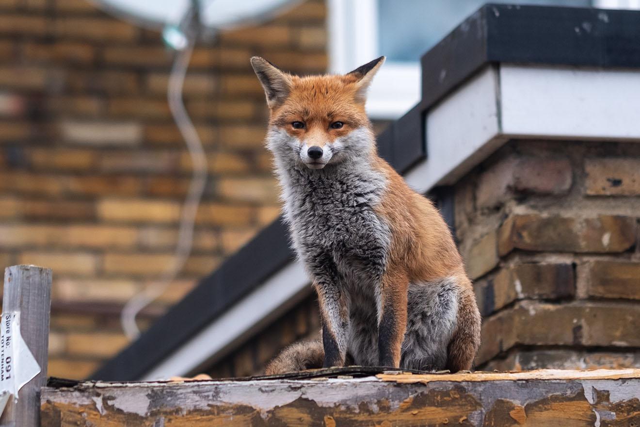 Wildtiere in der Natur – respektvoller Umgang statt Töten und Verdrängen