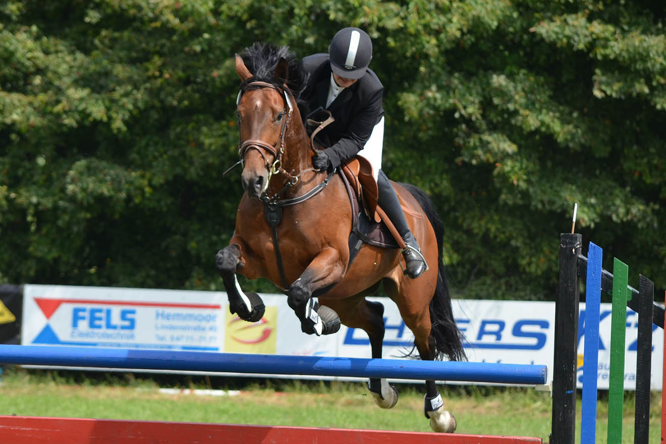 Pferdesport – die Wahrheit über das stille Leiden der Pferde
