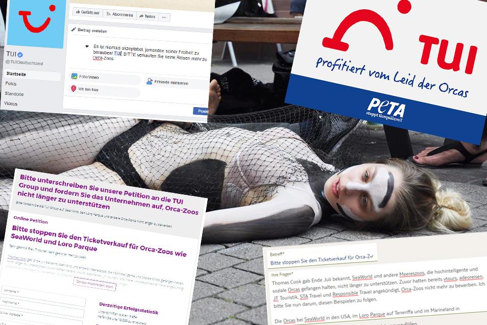 PETA-Aktionswoche: Fordern Sie TUI auf, das Leid der Orcas nicht länger zu unterstützen!