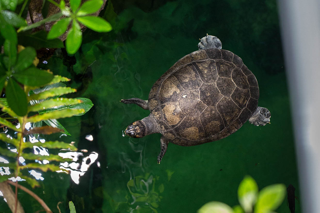 Schildkröten-Haltung: Wasser- und Landschildkröten richtig halten