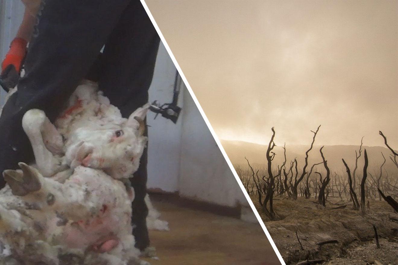 Die ökologischen Folgen von Wolle
