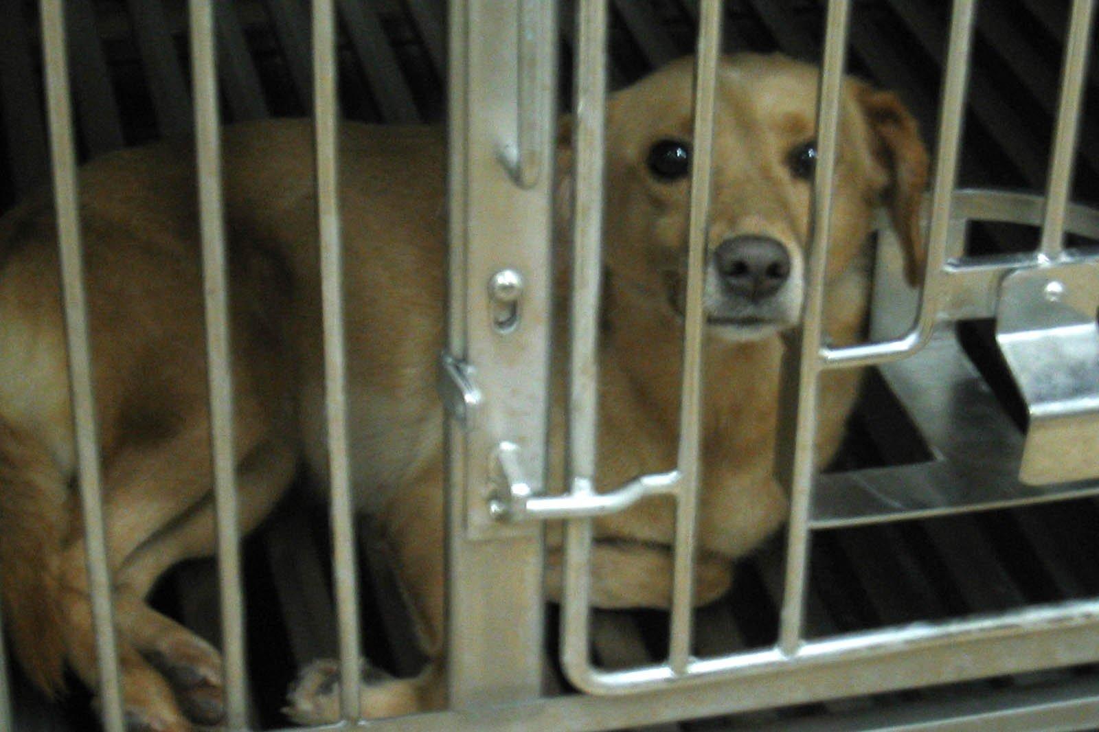 Iams: Grausame Experimente für Tiernahrung