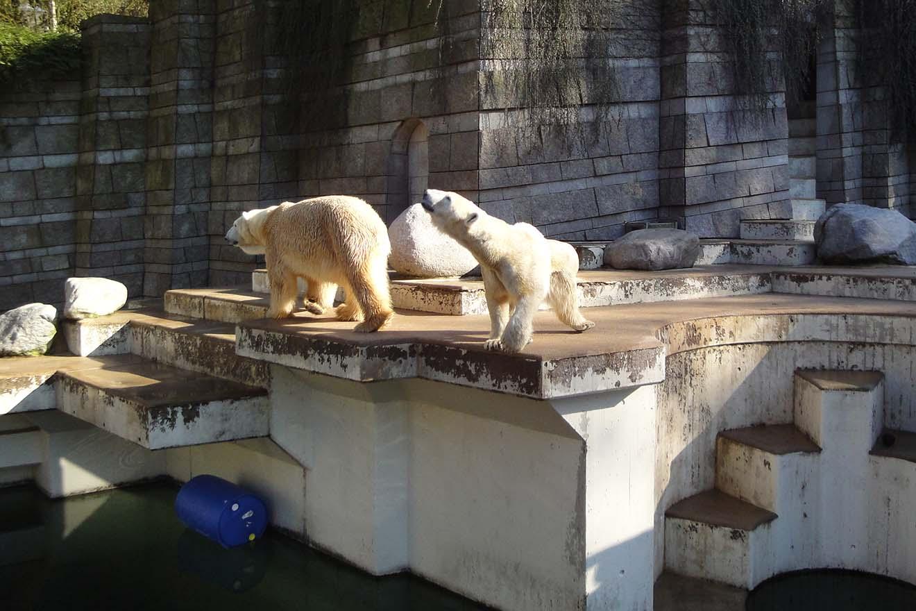 Tiere unter Drogen gesetzt: Psychopharmaka-Einsatz in Zoos