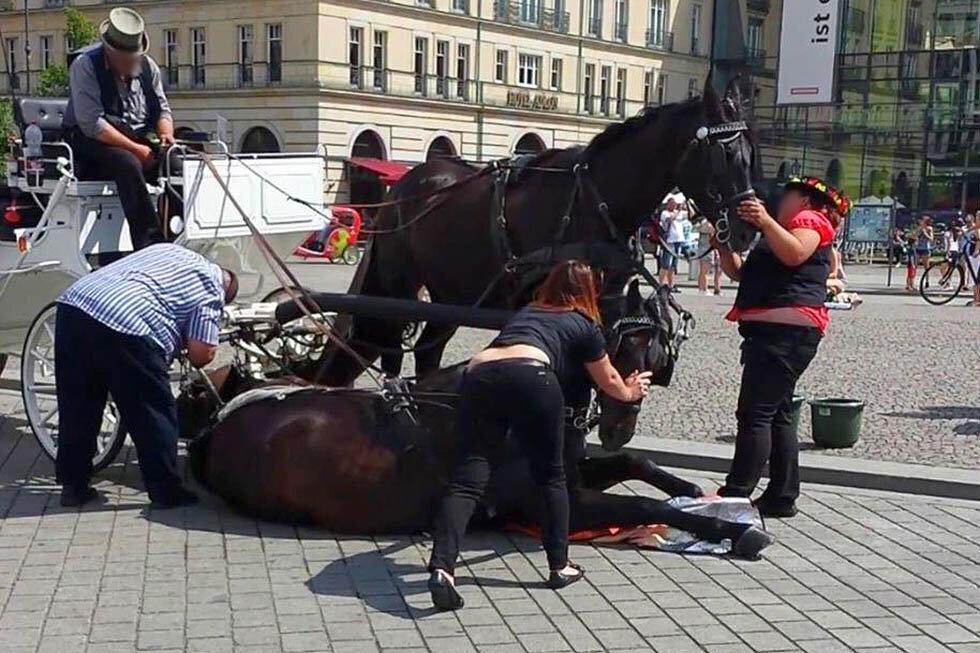 pferd auf dem boden