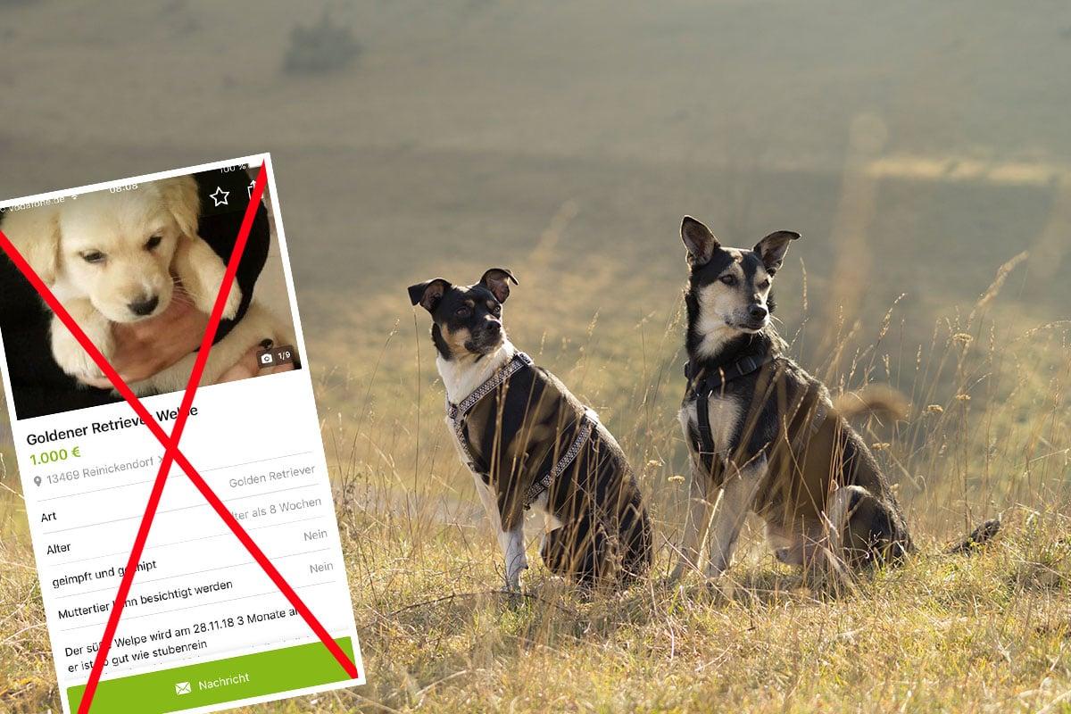 eBay Kleinanzeigen: Neue Richtlinien sorgen für mehr Tierschutz