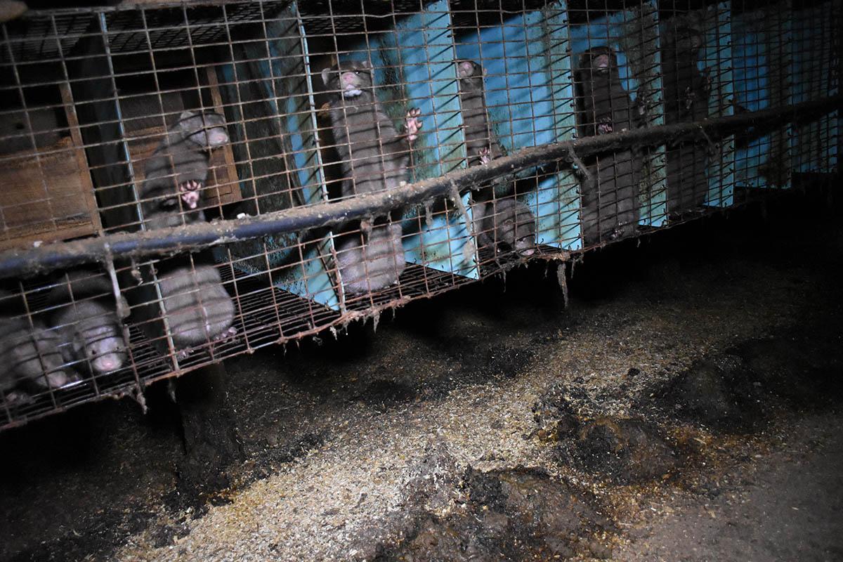 Griechische Pelzfarmen sofort schließen – unterschreiben Sie jetzt!
