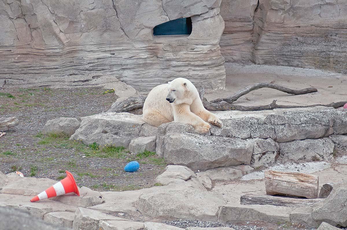 Tiere im Zoo: Diese Tierarten werden in deutschen Zoos eingesperrt