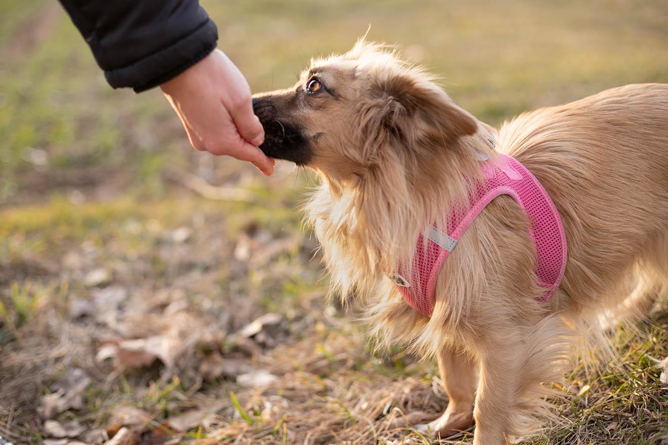 Hunde müssen schnüffeln dürfen – ein Grundbedürfnis für jeden Hund