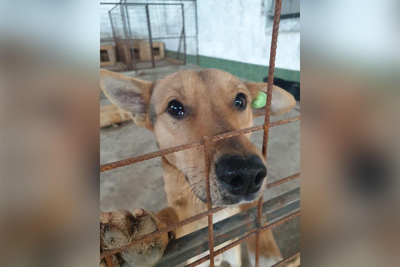 Grausames Tierheim mit Tötungsstation sofort schließen – jetzt helfen!