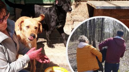 Hunde Frida und Noemi