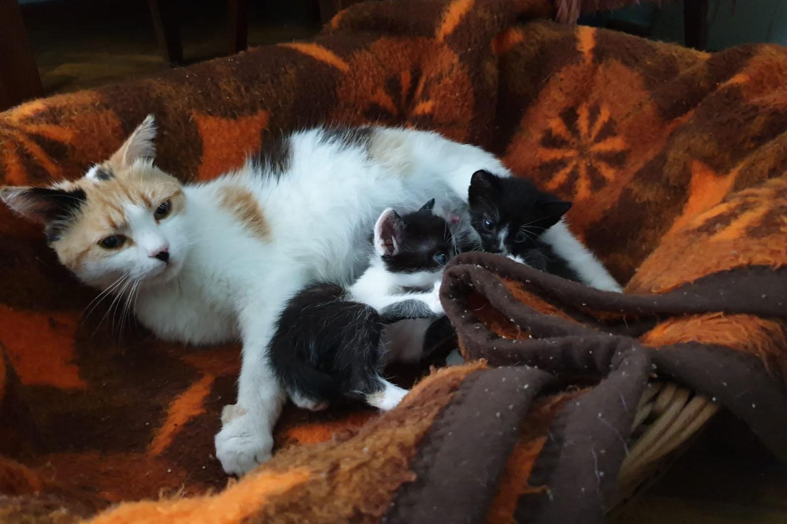 Mirabella – die Ersatzmama für vier Katzenwaisen